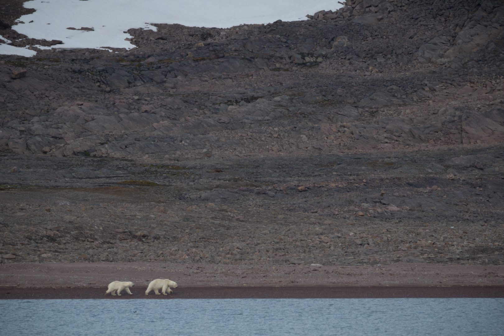 Polar bears (Female and his cub)